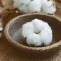 Fresh Cotton